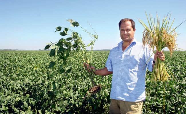 Rotação de culturas com arroz de terras altas