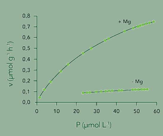 absorção de fósforo em função da concentração de Mg