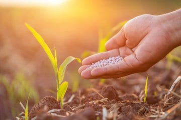 adubo para plantio de milho