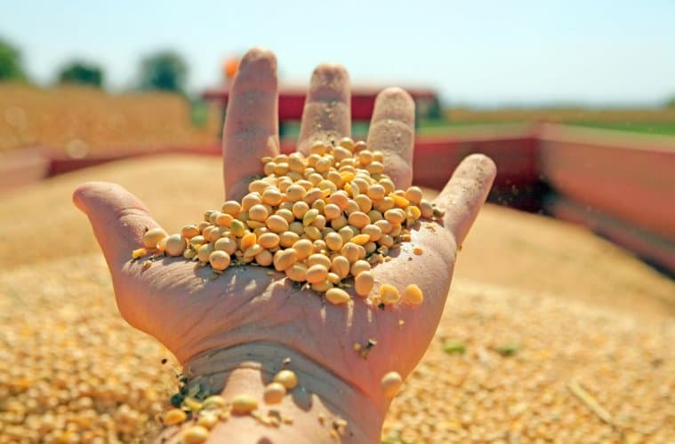 colheita da soja 2020