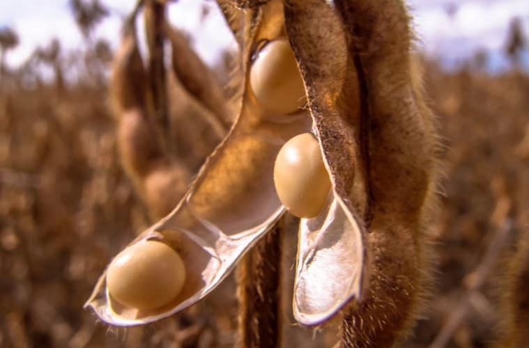 mercado futuro da soja