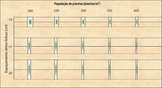 planta de trigo em diferentes arranjos