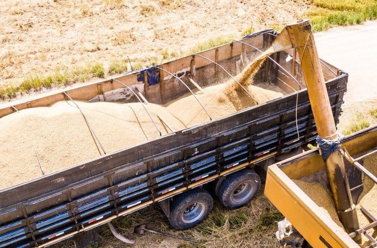 safra de arroz 2020