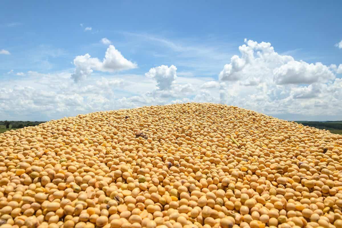 umidade de armazenamento da soja