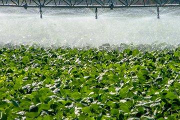agricultura irrigada