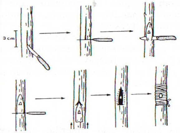"""Esquema representativo da borbulhia do tipo """"T"""" invertido"""