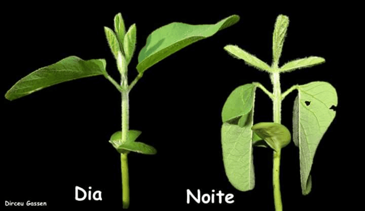 Movimentação das folhas de soja