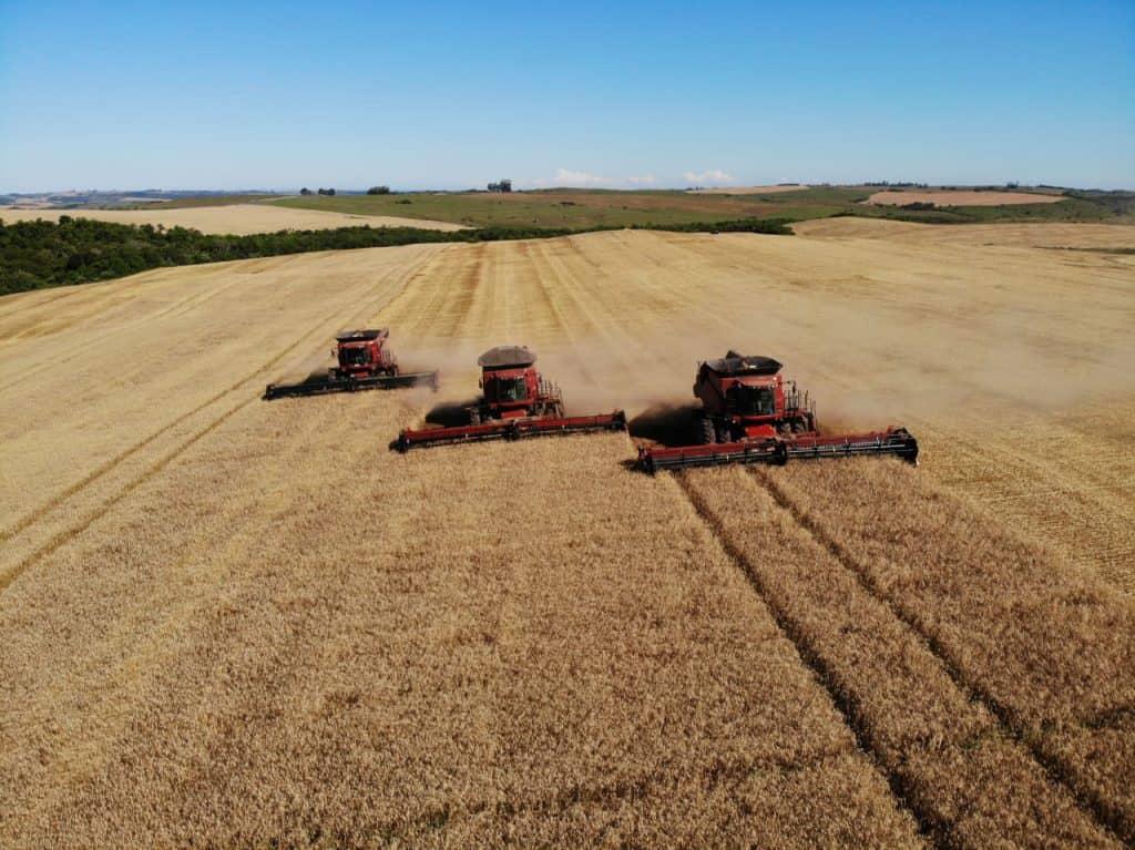 Foto da propriedade da família Müller com três colheitadeiras em um campo de trigo.