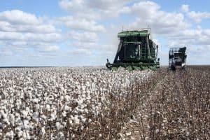 colheita mecanizada do algodão