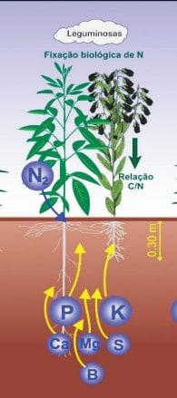solo alcalino - ilustração de Plantas de cobertura no sistema soja-milho-algodão no cerrado