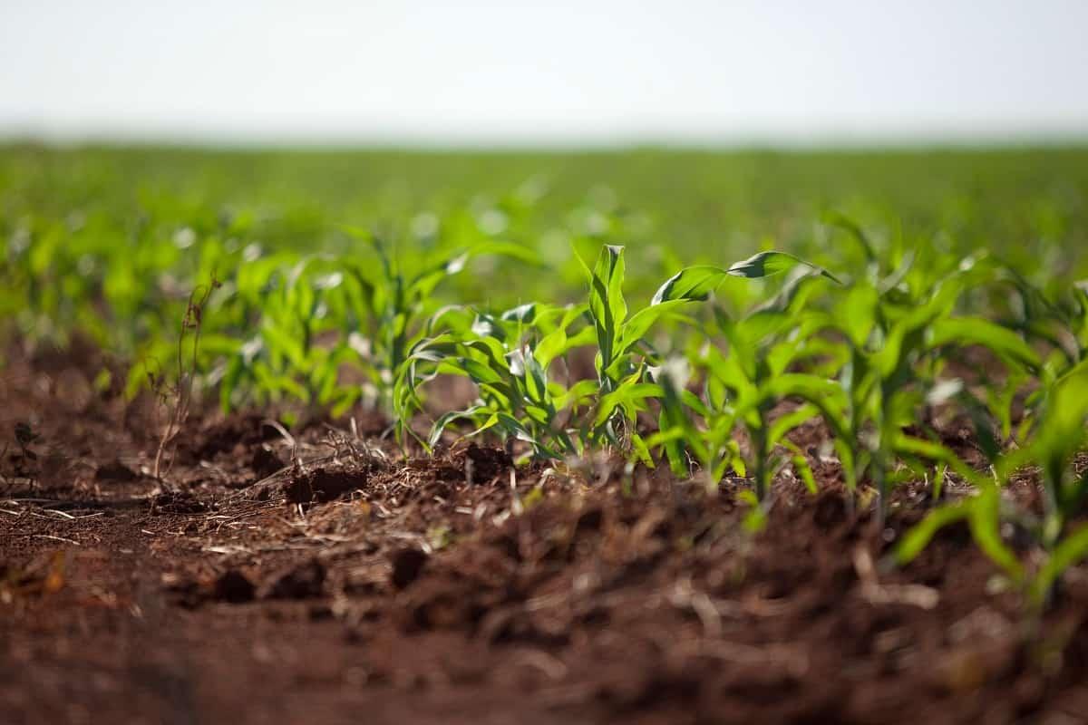 Preparo do solo para plantio de milho