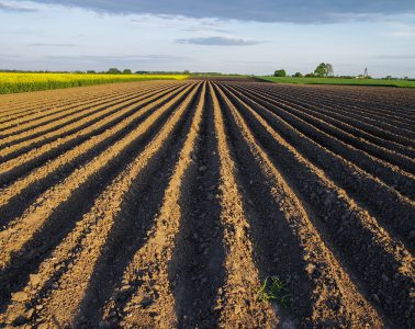 qualidade do solo