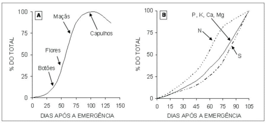 gráfico que demonstra acúmulo de matéria seca (A) e de nutrientes (B) pelo algodoeiro