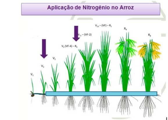 ilustração de aplicação de nitrogênio no arroz