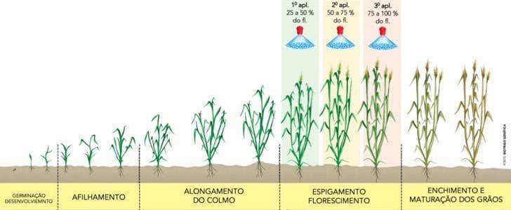ilustração mostra o controle químico em três aplicações no espigamento-florescimento da planta.