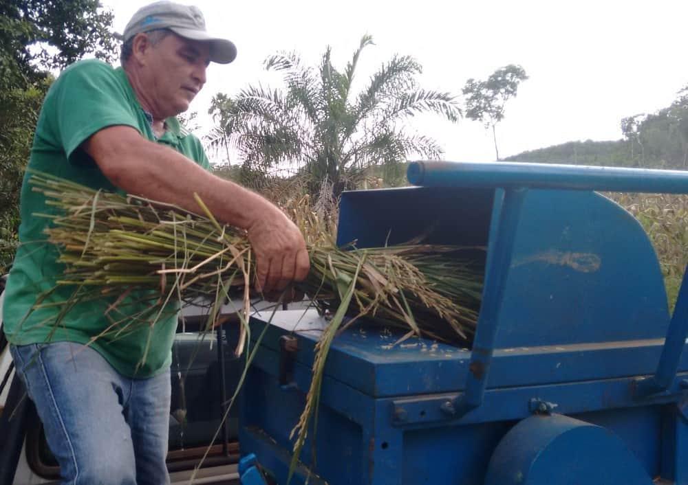 foto de agricultor em trilhadora de arroz