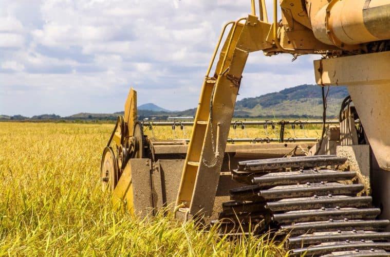 colheita mecanizada do arroz