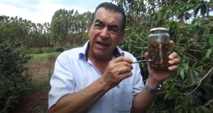 Pesquisador Júlio César de Souza com ninfas móveis encontradas em uma única cova de café na década de 80 em São Tomás de Aquino, Minas Gerais