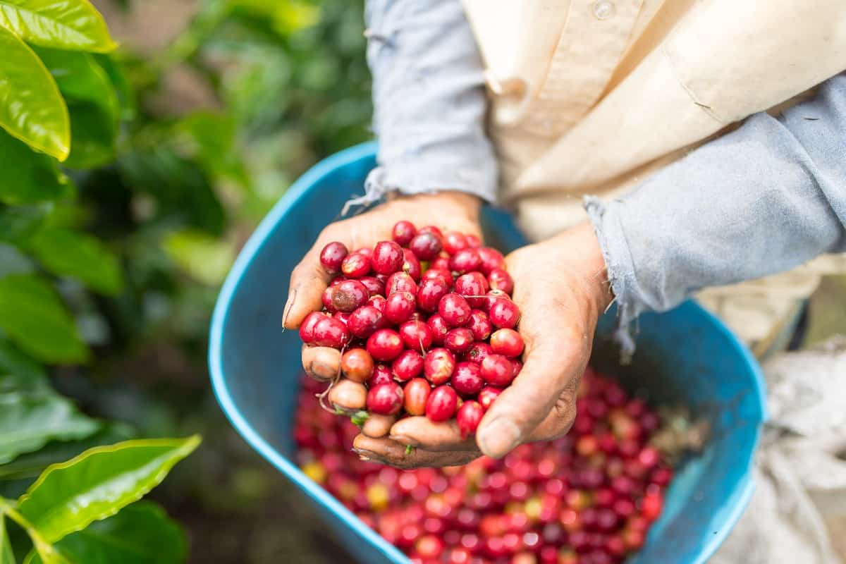 custo de produção do café