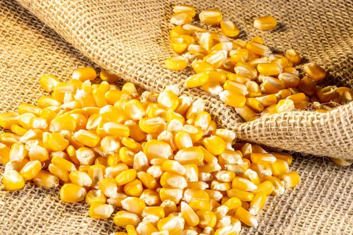 previsão do preço do milho em 2021