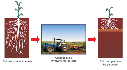 Esquema de um solo sem impedimentos no qual operações de revolvimento levaram à compactação limitando o crescimento radicular