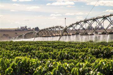 irrigação de café