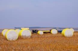 logística da pluma do algodão