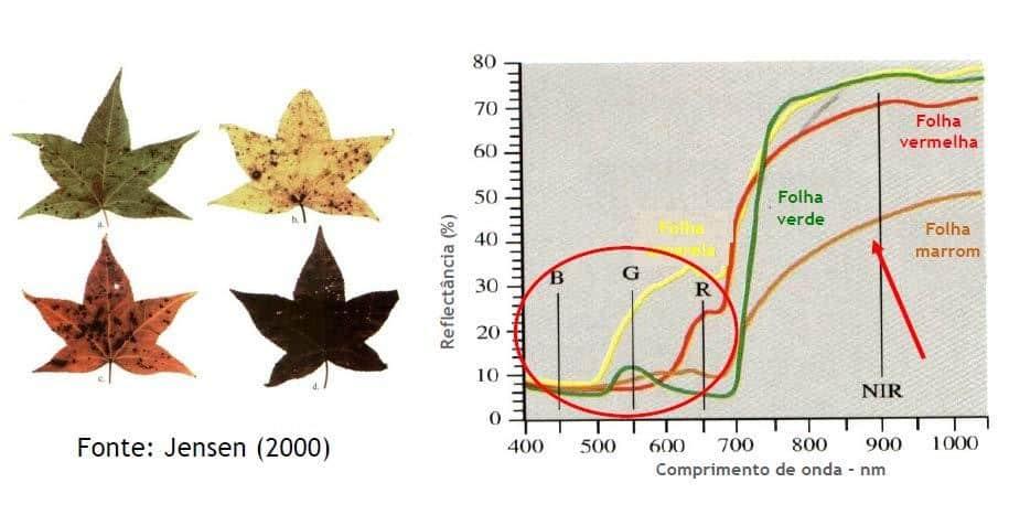 Comportamento espectral de uma folha amarela, vermelha, verde e marrom nos diferentes comprimentos de onda, região do visível (400 a 700 nm) e na região do infravermelho próximo IR)