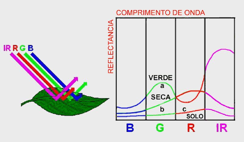 Comportamento espectral de uma folha verde, seca e do solo nos diferentes comprimentos de onda, região do visível (B - azul, G - verde e R - vermelho), e na região do infravermelho próximo (IR)