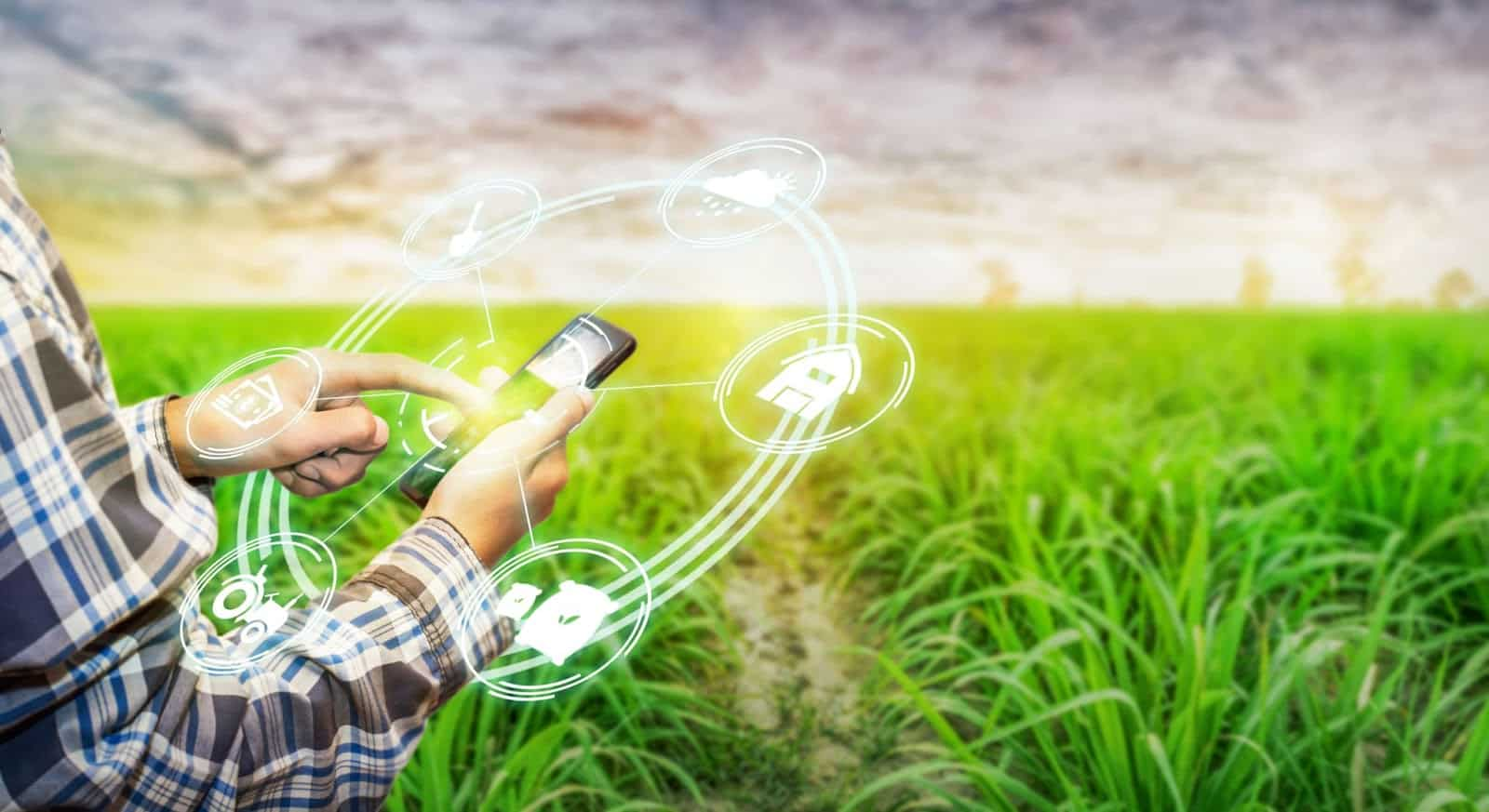 foto de homem de camisa xadrez azul e cinza mexendo em um celular em uma lavoura de arroz. Em volta do celular saltam vetores tecnológicos.