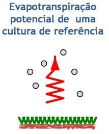 Representação da evapotranspiração da cultura (ETc)