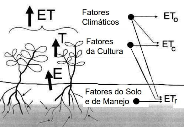 Representação dos tipos de evapotranspiração