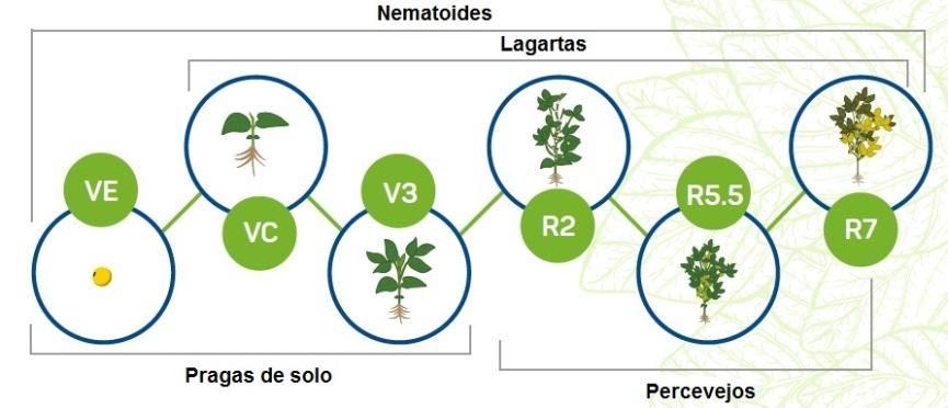 infográfico com desenvolvimento de pragas seguindo o estádio fenológico da soja