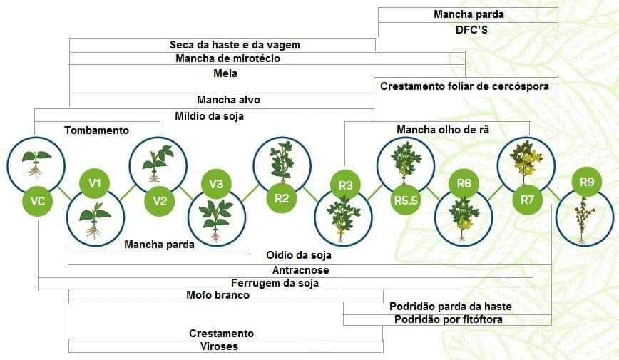 infográfico com desenvolvimento de doenças seguindo o estágio fenológico da soja