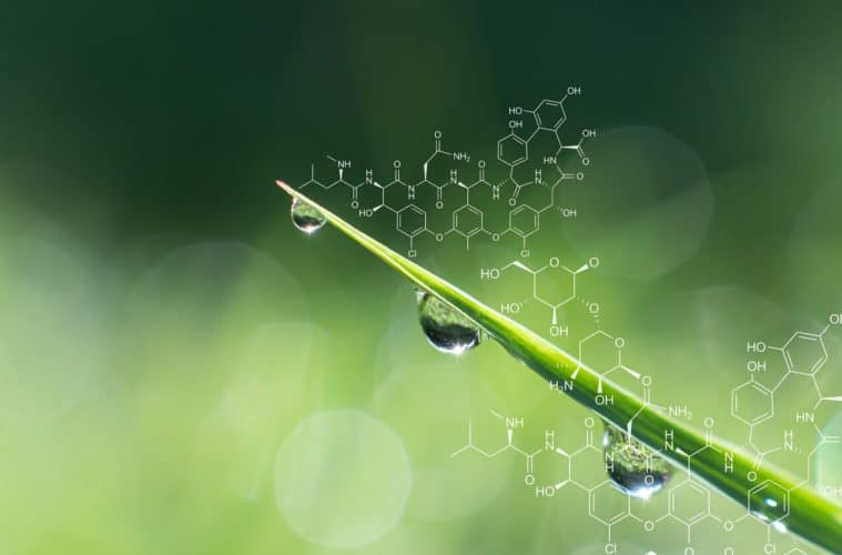 glicina betaína na agricultura