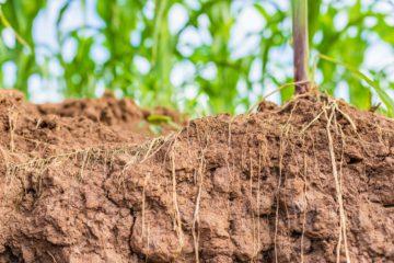 resistência do solo