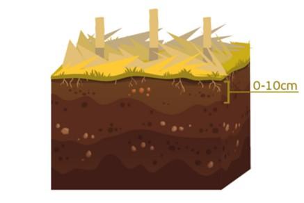 As amostras de solo devem ser coletadas na camada de 0 - 10 cm