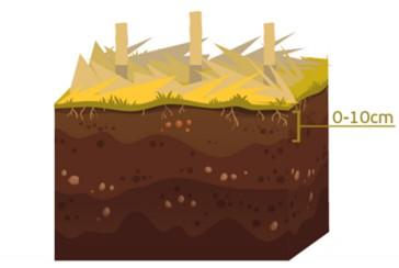 ilustração de como as amostras de solo devem ser coletadas na camada de zero a dez centímetros