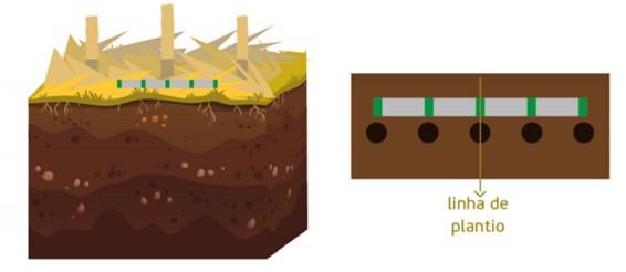 ilustração de representação de coleta em cada ponto de amostragem