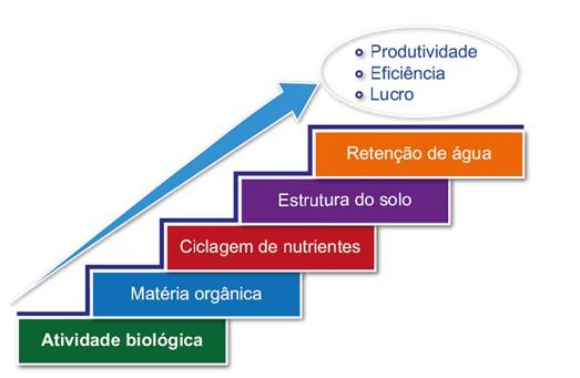 infográfico que mostra que o aporte de resíduos vegetais possibilita o aumento da atividade biológica que é o ponto inicial para melhoria de um solo