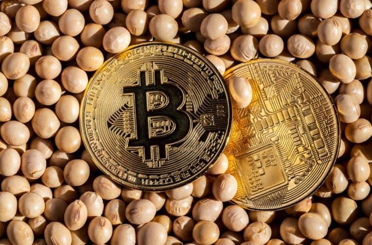 blockchain na agricultura