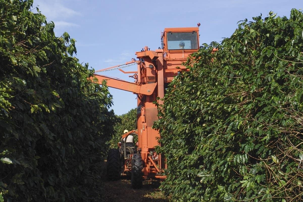 colheita mecanizada do café