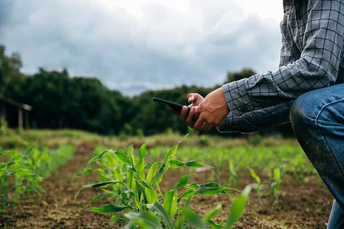 Controladoria e gestão financeira: imagem mostra homem abaixando no campo, olhando o celular