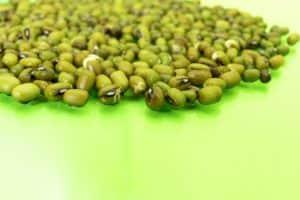 Foto de sementes esverdeadas de soja
